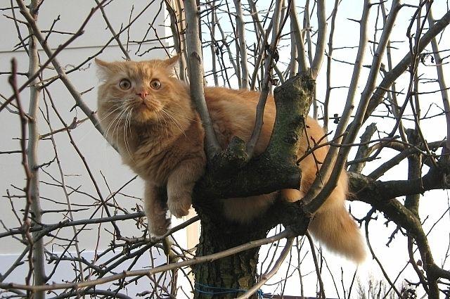 Бешеный кот покусал и поцарапал четырех человек в Яворовском районе.