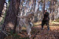 Охотиться на пернатую дичь можно только с гладкоствольным оружием.