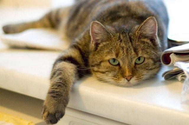 Ученые выяснили, что коты знают свое имя и могут просто игнорировать хозяев