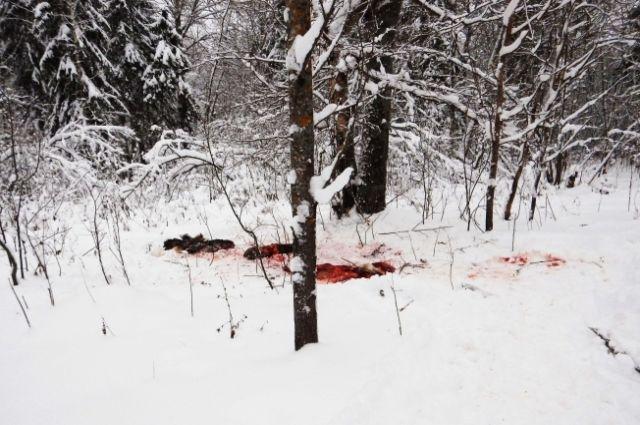 В Тюменской области браконьеров отслеживают с воздуха