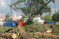 В мэрии уверяют: вырубают только аварийные деревья.