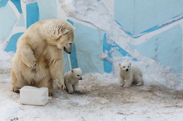 У медведей Кая и Герды появились мальчик и девочка.