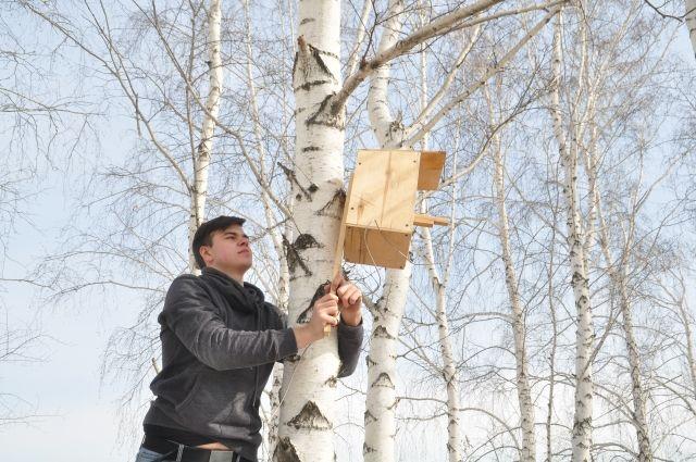 За время проведения акции в Оренбуржье изготовили и развесили более 7500 скворечников.