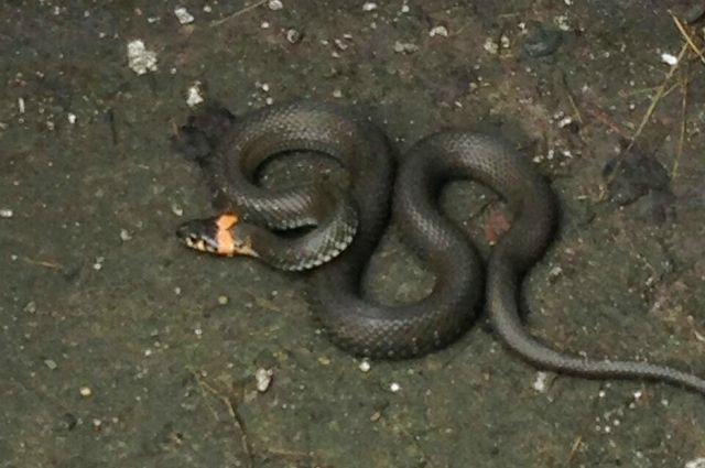 Под Тюменью в лесах проснулись змеи