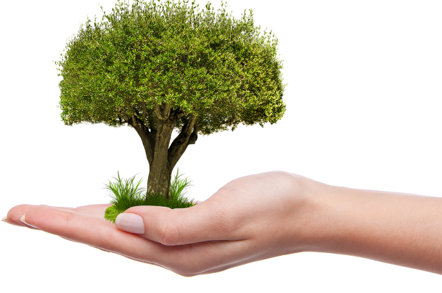 Очередное заседание экспертов «Сибинформбюро» посвятят «зеленому бренду»