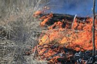 В Черниговской области за сутки произошло 86 пожаров.