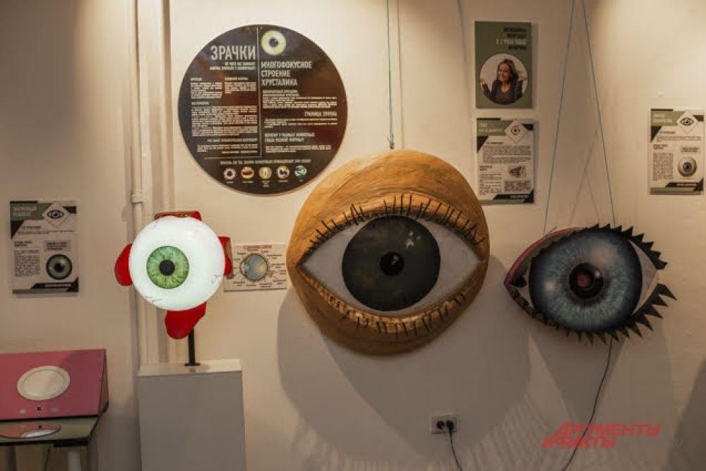 Все желающие могут изучить строение и функции глаза и понять, как важны и уязвимы наши органы зрения.