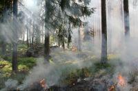 Вдоль трассы Тюмень - Тобольск произошел пал травы