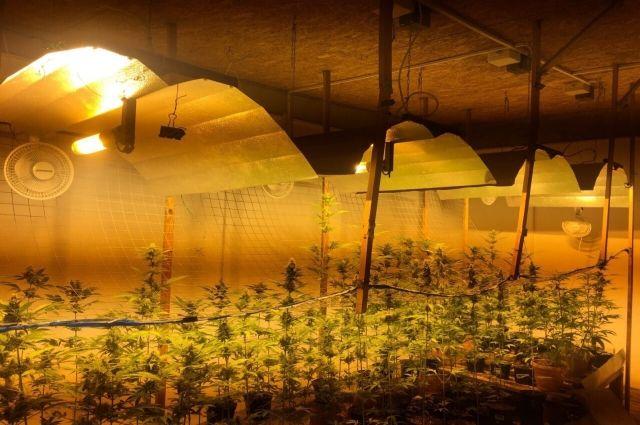 Килограмм марихуаны изъяли полицейские в Комсомольском районе.