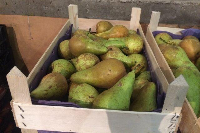 В Оренбурге обнаружено 208 кг санкционных груш из Польши