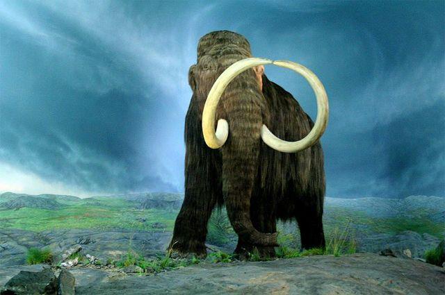 Когда вернутся мамонты? Мегапроекты, меняющие природу