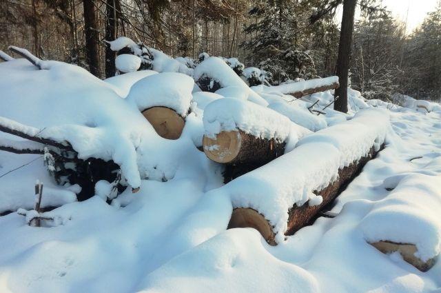 Деревья рубили в феврале.
