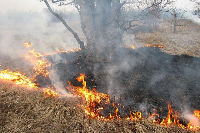 Остановив полосу огня, пожарные еще час тушили неконтролируемый пал травы на открытой территории.