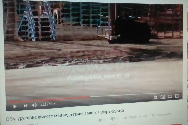 В Бугуруслане медведя привязали к забору детсада