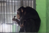 Должник отработает в зоопарке 50 часов.