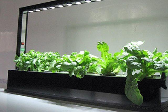 Для сельскохозяйственных и лечебных растений важно наличие круглосуточного энергоэффективного освещения.