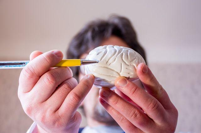 На всём готовом. Почему у людей уменьшается размер мозга? - Real estate