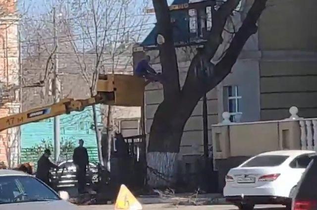 В Оренбурге пилят старинный дуб у драмтеатра - СМИ