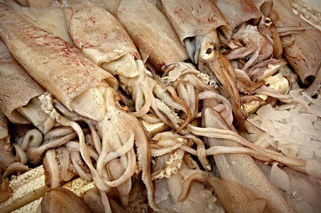 В Калининград не пустили 27 тонн гигантского кальмара