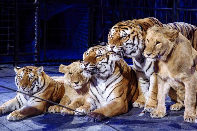 Цирковые животные получат солярий и бассейн.