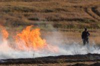 Тюменцев будут штрафовать за поджоги травы