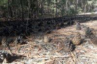 Около 400 деревьев попали под топор.