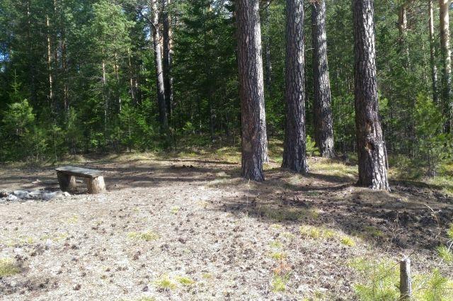 Скрыться в лесу от сотрудников ДПС мужчине не удалось.