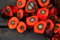 Специалист рассказала о пользе пальмового масла