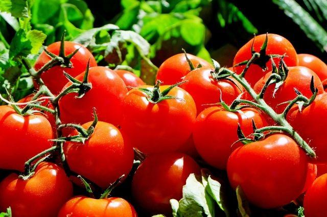 В Калининградскую область не пустили 18 тонн македонских томатов