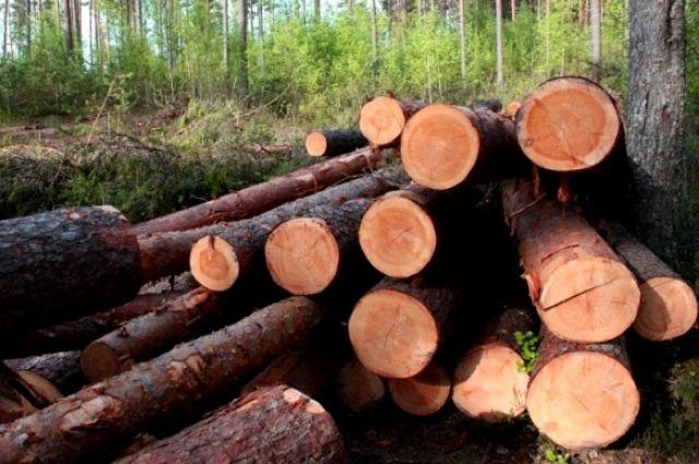 Украина увеличила заготовку леса-кругляка на 23%
