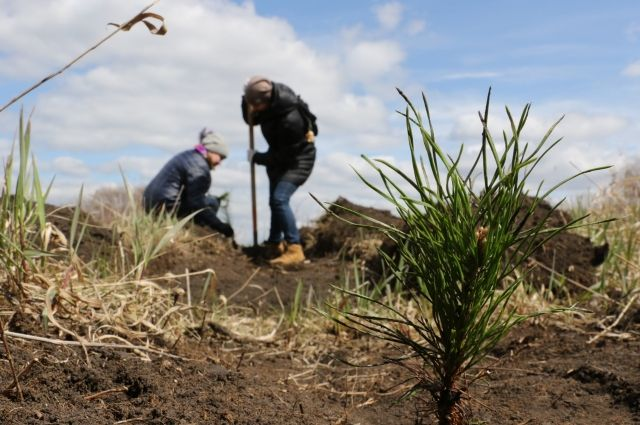Также в весенне-летний период в Кемерове высадят более 1 млн цветов.
