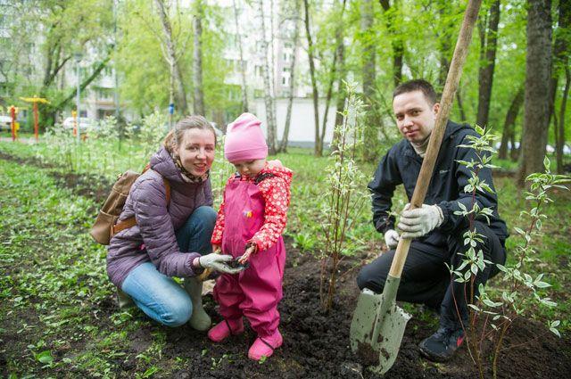 Каждая московская семья может высадить дерево в честь новорождённого сына или дочери.