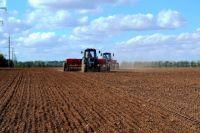 Сибирские крестьяне могут не получить господдержку из-за того, что значительная часть семян в хозяйствах СФО не соответствует госстандартам.