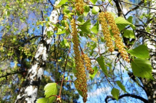 Медики спрогнозировали в Украине массовую вспышку аллергии