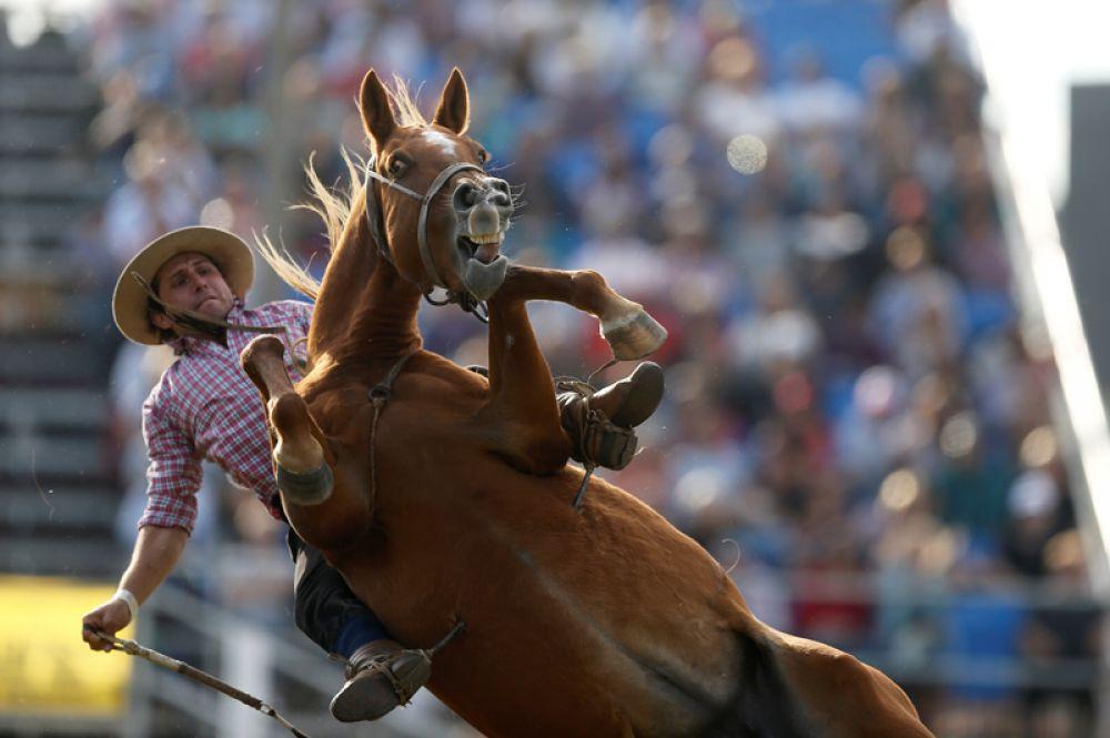 Гаучо на лошади во время родео на креольской неделе в Монтевидео, Уругвай.