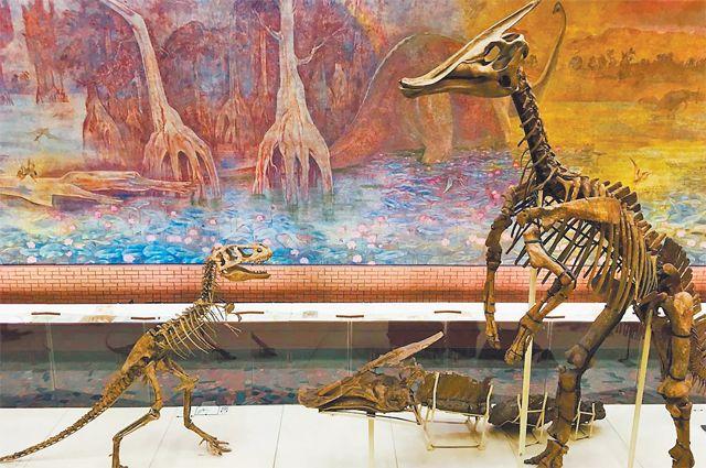 Скелеты травоядного паразауролофа и маленького плотоядного ютараптора в Палеонтологическом музее имени Ю. А. Орлова