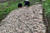 В Днепропетровской области задержаны браконьеры с 200 кг рыбы