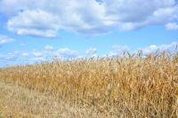 Общий объем поддержки агропромышленного комплекса края в 2019 году составит 5,7 млрд рублей.