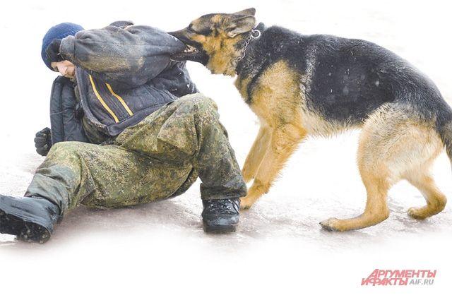 Служебно-розыскная собака взяла след и привела кинолога к дому, у которого находился подозреваемый.