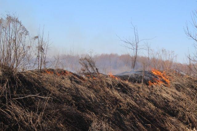 За несколько дней в регионе потушено два лесных пожара