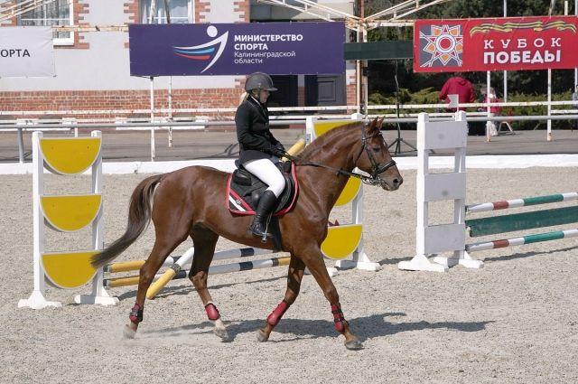 В Черняховске пошёл конно-спортивный турнир