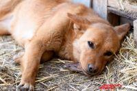 В Оренбурге зоозащитники обратились в полицию из-за отстрела животных