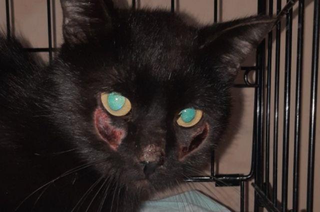В приюте настрадавшиеся коты даже боятся шелохнуться при виде человека.