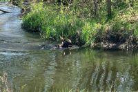 В Донецкой области пенсионер застрелил вора и выбросил тело в речку