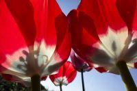 Стала известна программа празднования 1 мая в Калининграде
