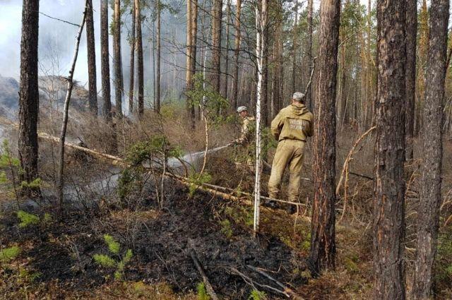 В Тюменской области за сутки потушено три лесных пожара