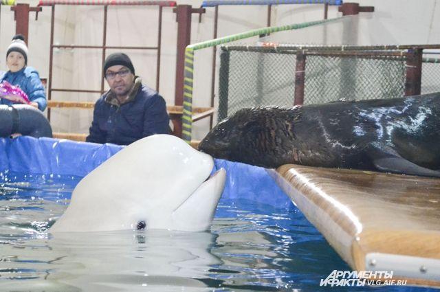 Ижевский путешественник объявил голодовку ради дельфинов