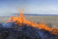 С начала года возбуждено уже 170 административных дел на граждан, которые нанесли ущерб природе.