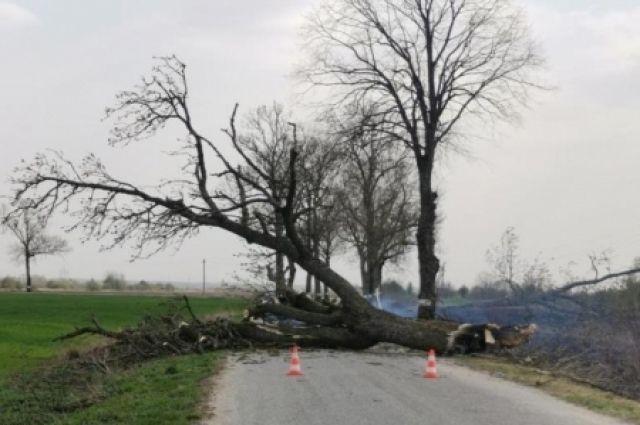 В Славском районе автомобиль наехал на дерево, упавшее на дорогу