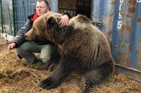 Медведю всего 3 года. Но он уже перерос «папу» и набрал 250 кг.
